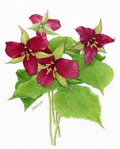 Botanical Watercolours